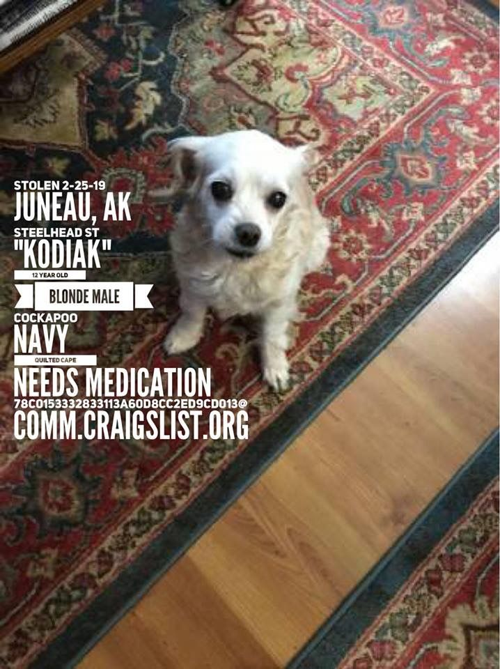 Pin on WHITE AND CREAM DOGS US LOST DOG REGISTRY