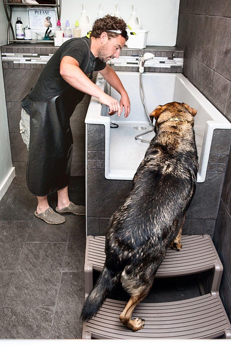 In you go! selfserve dog wash saratoga springs dog