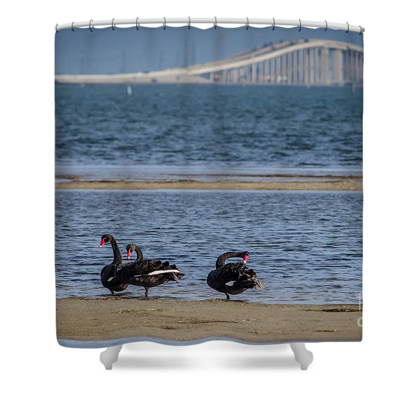 Three Black Swans #showercurtain by Debra Martz www.debramartz.com