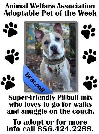 Snj Today S Pet Of The Week Is Broccoli This Handsome Pitbull Mix Will Greet You With A Wagging Tail And Kisses The Perfec Animals Animal Welfare Pitbull Mix