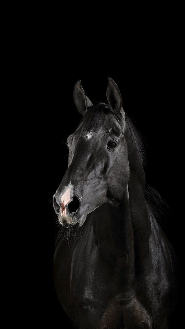 Background Iphone Horses Horse Wallpaper Black Horses
