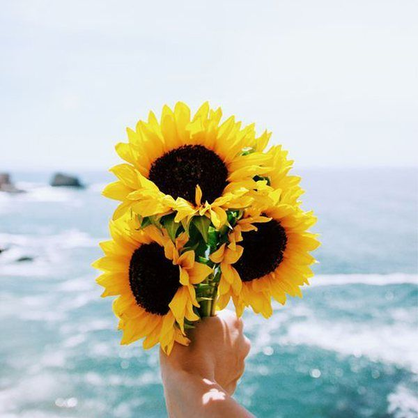 Sunflower Is Love Sunflower Sourceunknown Http Butimag Com Ipost 1557676209813557162 Code Bwd Kkja4 Q Sunflower Wallpaper Beautiful Flowers Flowers