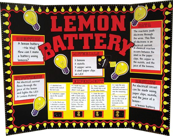 make a science fair poster butterfly metamorphosis project
