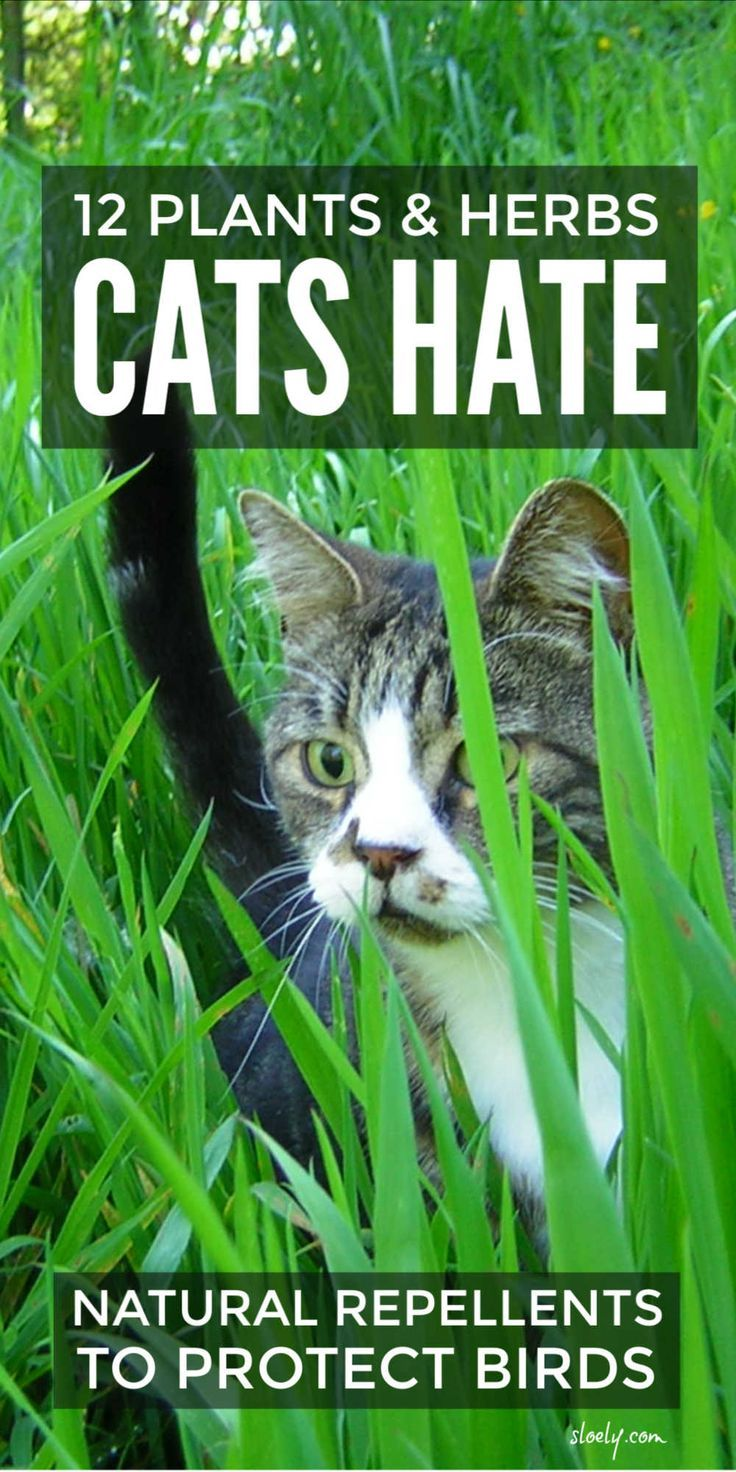 These cat repellent plants and herbs for your garden and