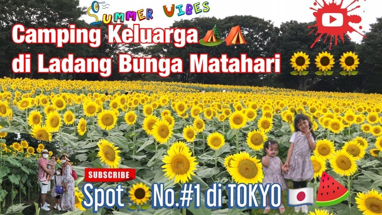 Camping Keluarga di Ladang Bunga Matahari (Tachikawa