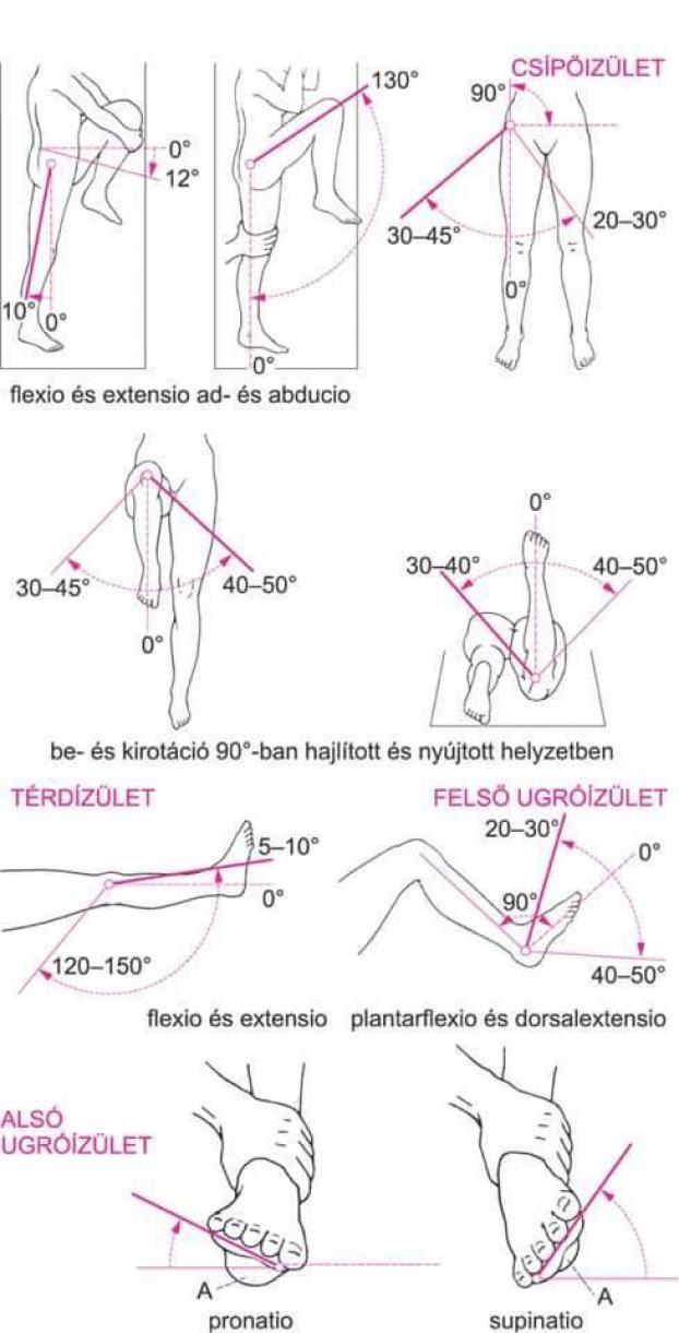 posted 2016 oktober forras royalfitness hu tightpsoas yoga anatomy muscle anatomy physical therapy