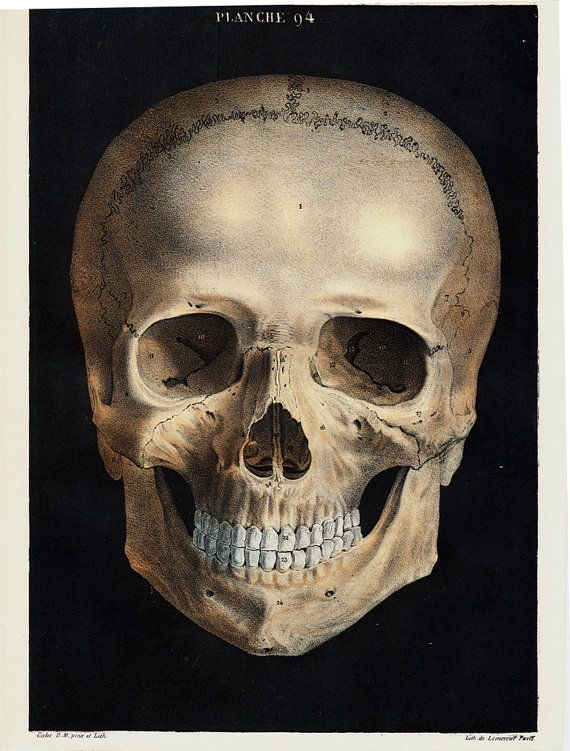 1844 Antique SKULL ANATOMY print by by TwoCatsAntiquePrints | 3d ...