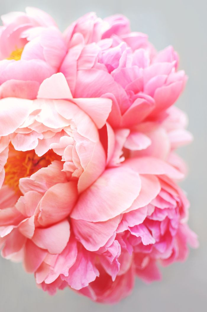 thenorwegiancurator:   Peonies Forever by Ez... - floralls
