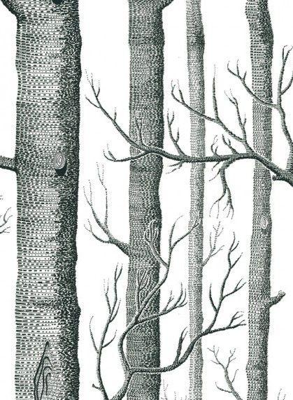 Papier Peint Woods Noir Et Blanc De Cole And Son Papier Peint Papier Peint Foret Fond D Ecran Bouleau