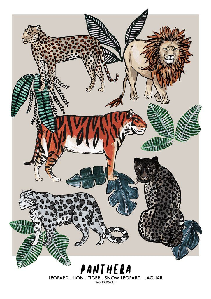 PANTHERA Jungle Children's Print Childrens prints