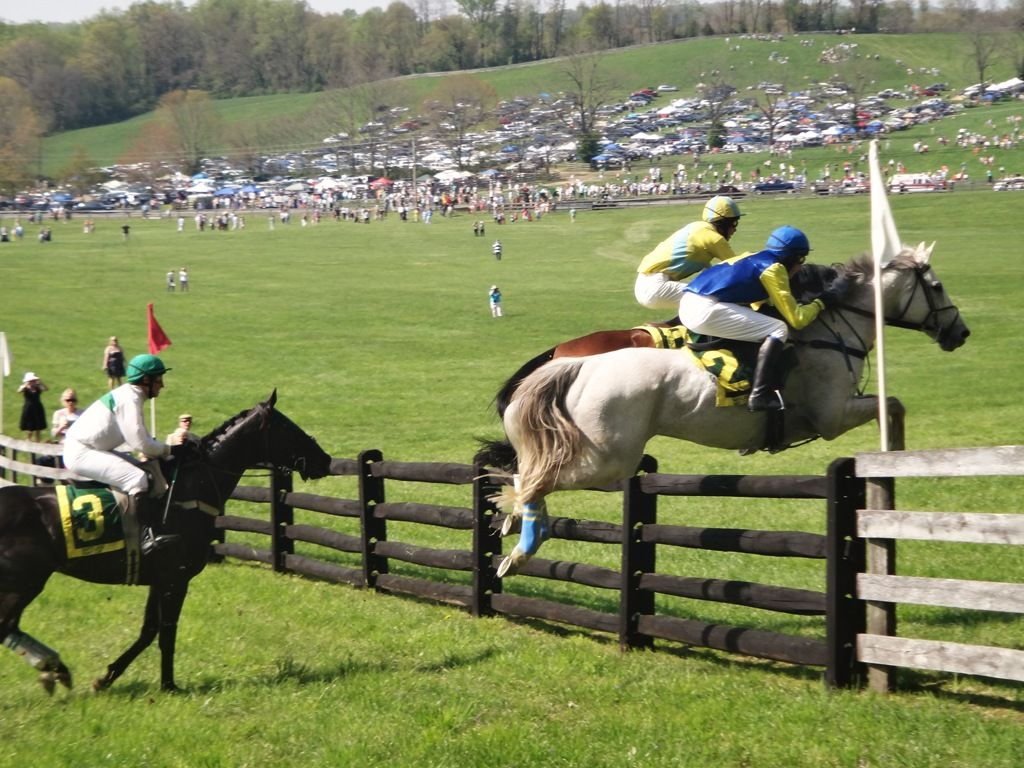 Explore Baltimore The Maryland Hunt Cup Horses Horses