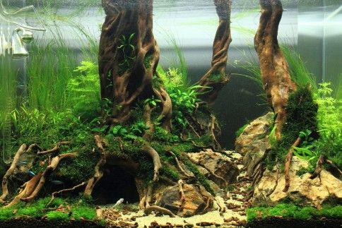 Aquascape Ideas Driftwood Nature Style Aquascape