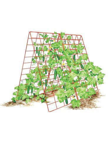 78c446902132e1c13ed233ebcaf10ceb - Gardener's Supply Company Large Cucumber Trellis