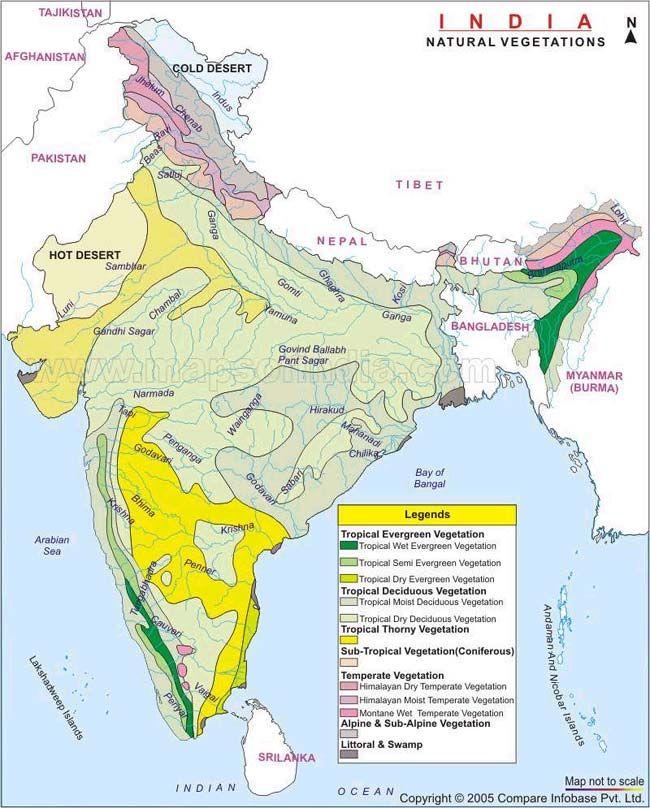 Natural vegetation of india india and india map natural vegetation of india thecheapjerseys Images