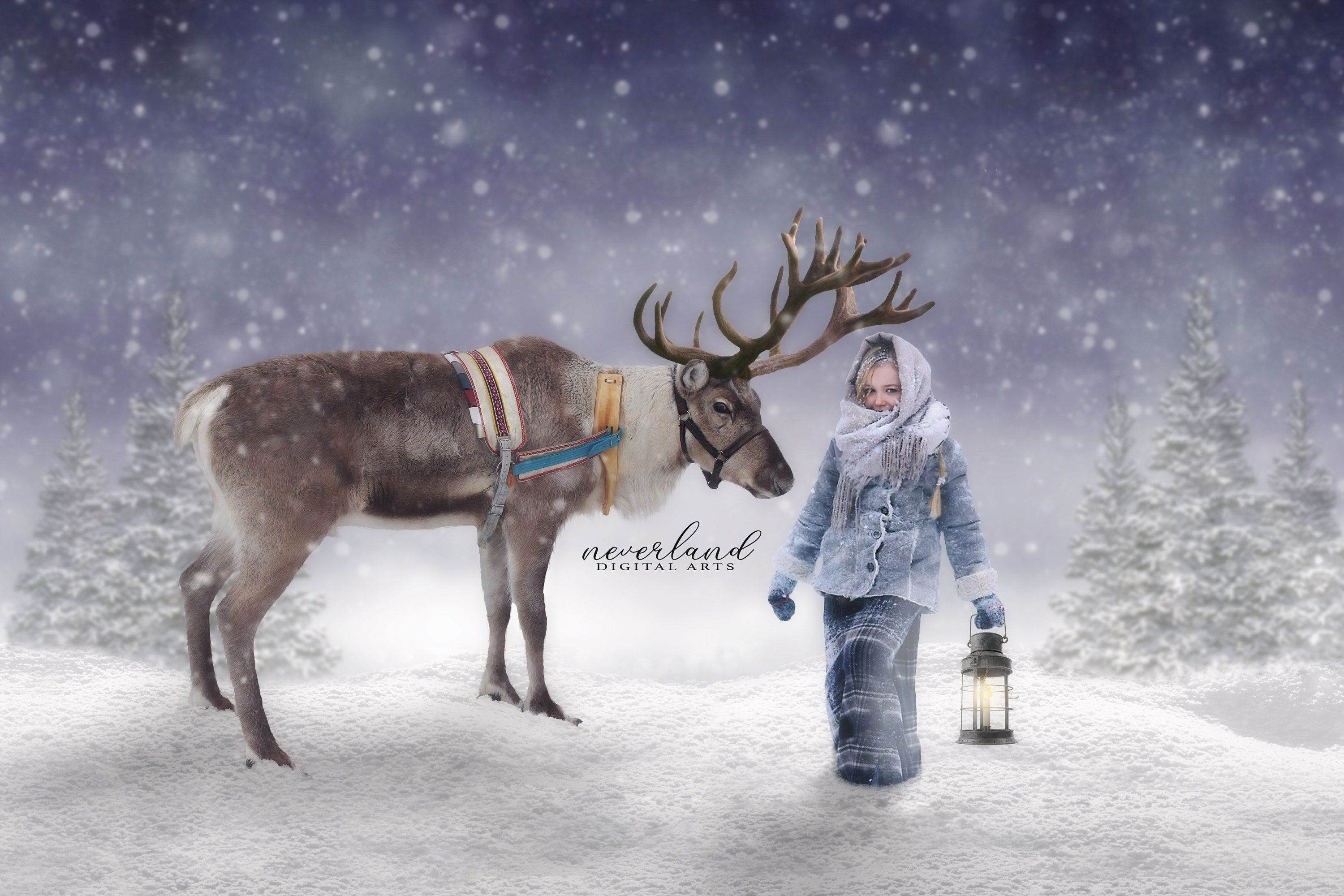 Reindeer Background for Photographers / Christmas