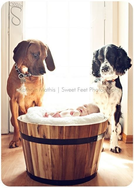 Too cute I dont think that Rocky and Bella would behave this – Birth Announcement with Dog