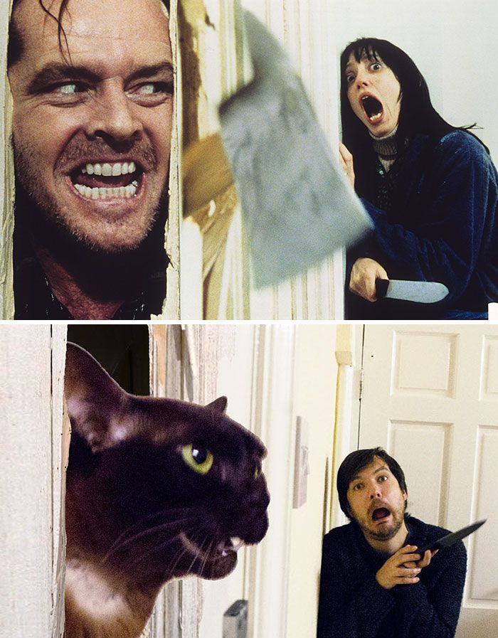 Guy And His Cats Recreate Famous Movie Scenes Together And It Couldn T Get Any Funnier Humour Animaux Film Celebre Film Horreur