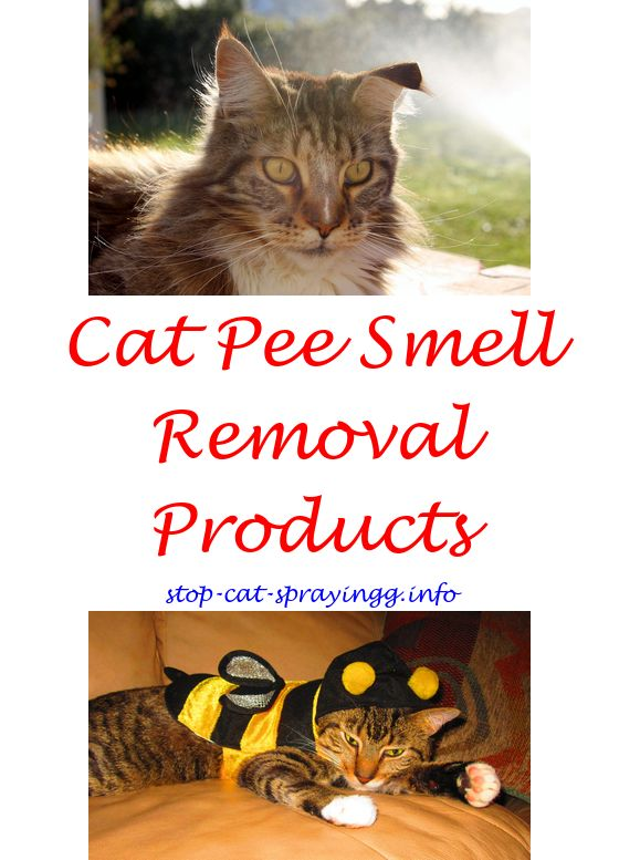 Free Model Boat Hull Plans Flea spray for cats, Male cat