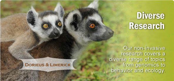 Duke Lemur Center Tours, Conservation, Research and Education of Lemurs