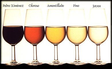 Vinos De Jere Sherry Varieties Fro Jerez In Spain Wine Sherry