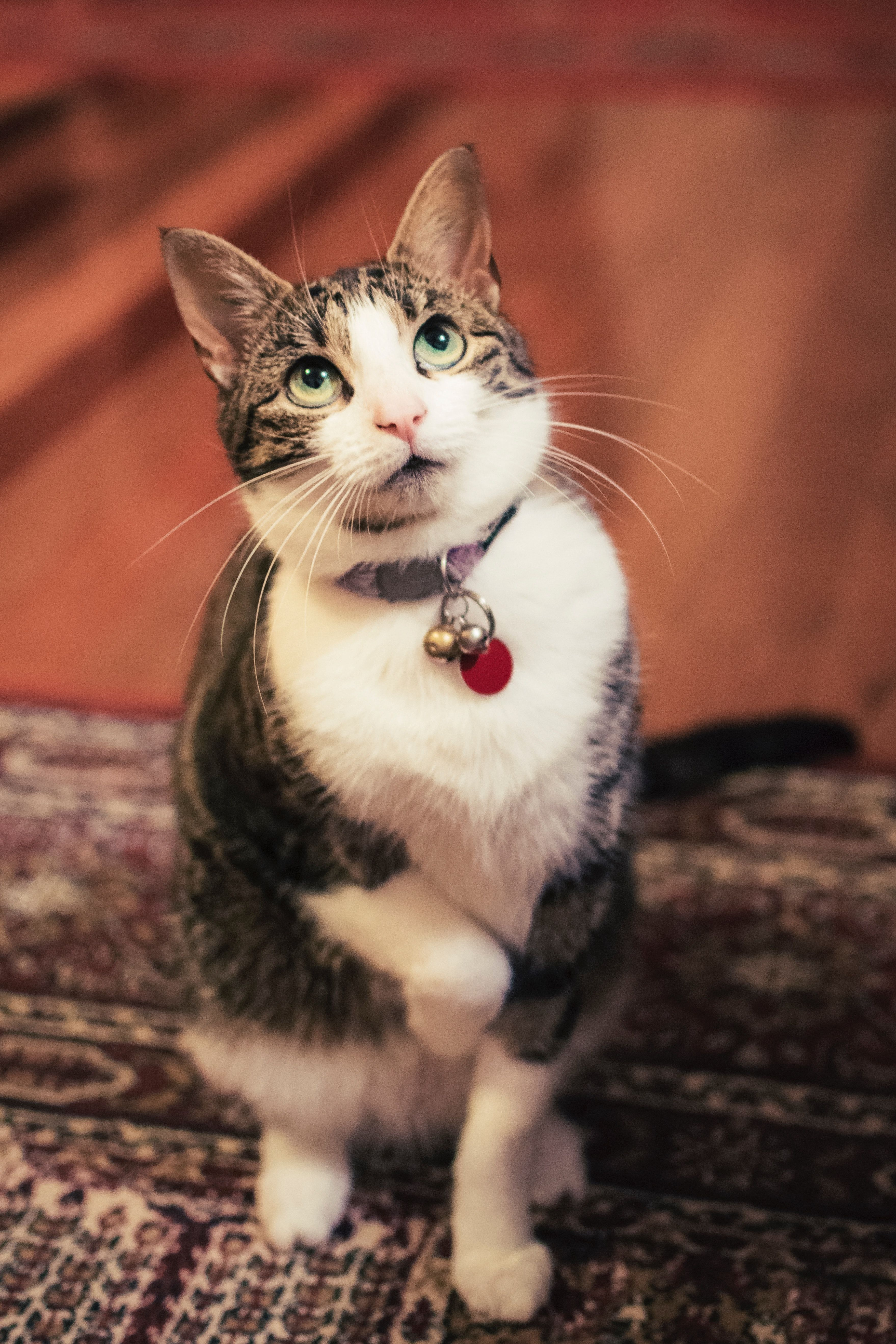 Cat With Beautiful Green Eyes In 2020 Cute Baby Cats Cats Snowshoe Cat