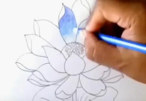15 Gambar Bunga Teratai Pensil Download 520 Gambar Bunga Teratai Pensil Paling Keren Sketsa Bunga Gambar Sketsa Bunga Teratai Yan Bunga Teratai Bunga Gambar