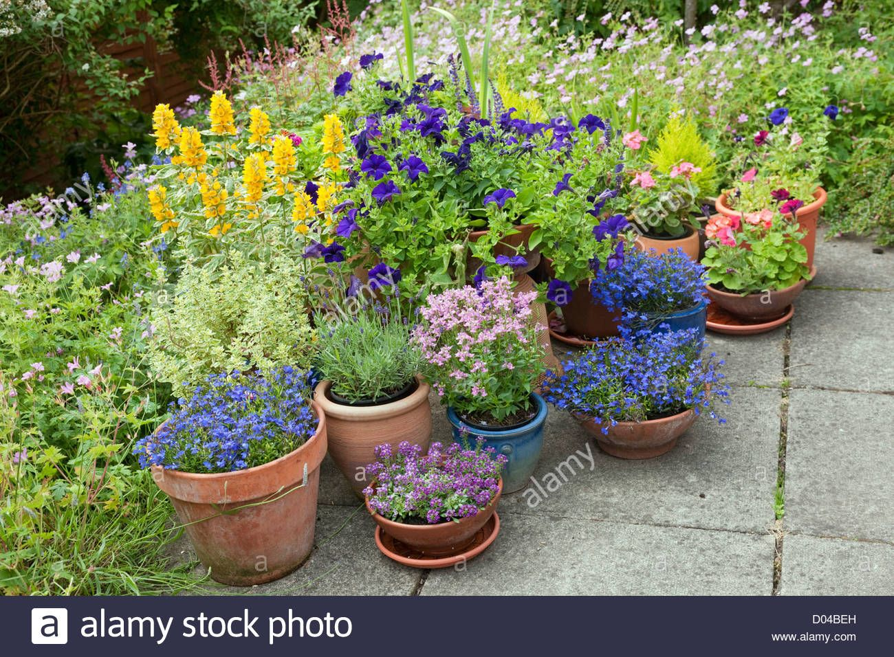 Patio With Summer Flowering Perennial Plants In Border And