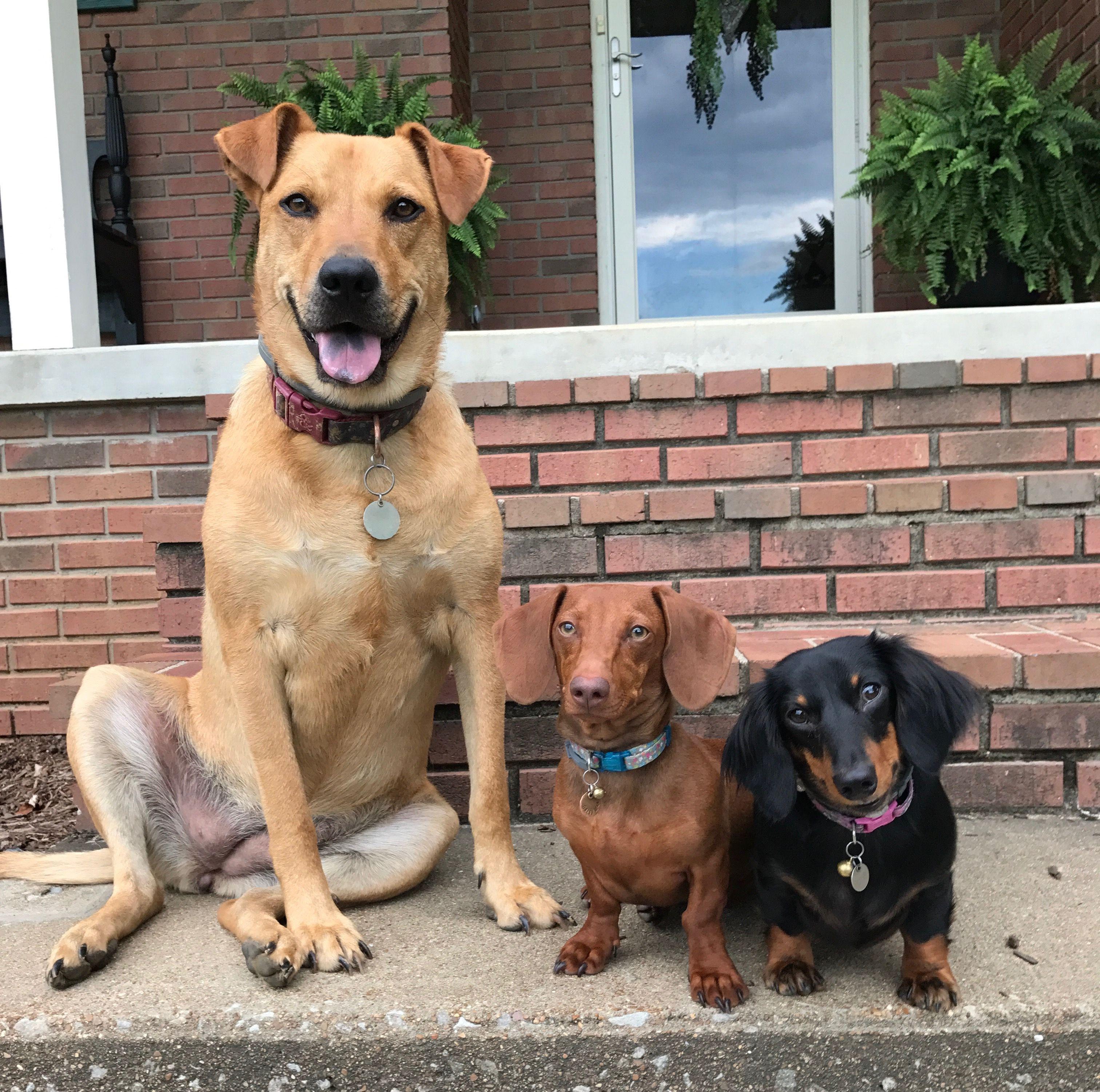 Family Photo Dachshund Sisters Dog Family Doggie Ladies