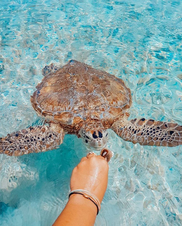 Meeresschildkröte!  #meeresschildkrote, - #Meeresschildkröte #campingpictures Meeresschildkröte!  #meeresschildkrote, - #Meeresschildkröte