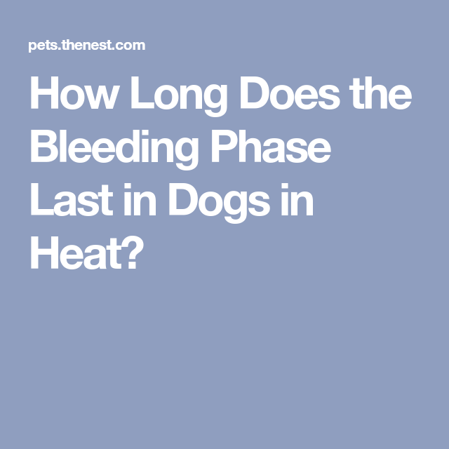 How Long Does The Bleeding Phase Last In Dogs In Heat Dog