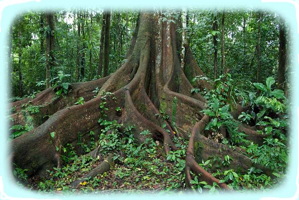 Tropical Rainforest Biome | Tropical-Rainforest Biome | krissy ...