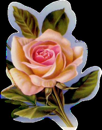 Fleurs Roses -