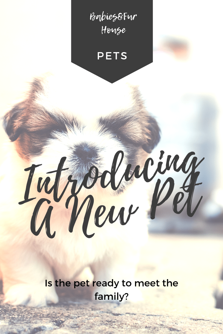 Introducing A New Pet To The Family Babies Fur House Pets Dog Care Tips Kitten Care