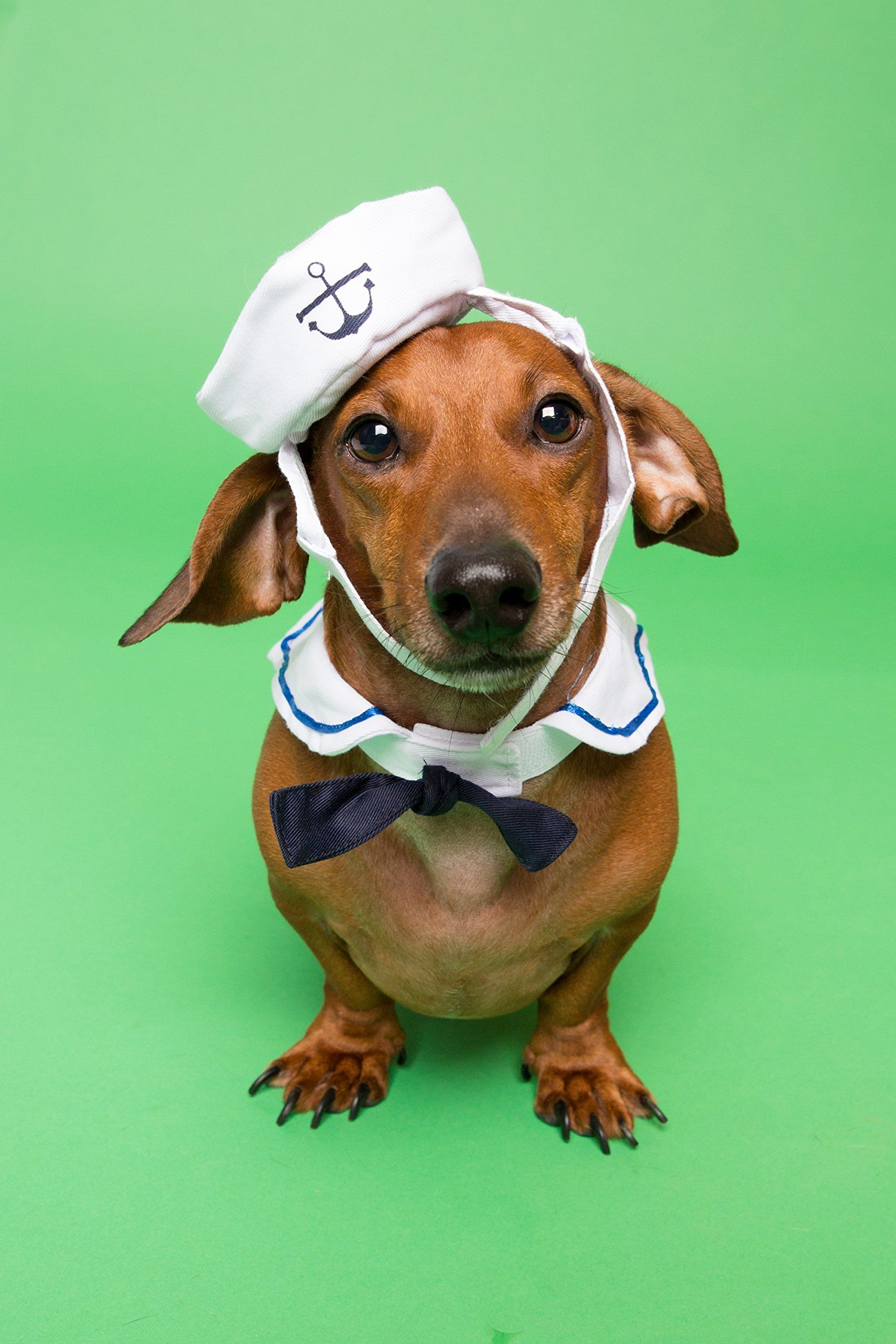 Sailor Nautical Costume for Small Dogs and Cats Great Navy