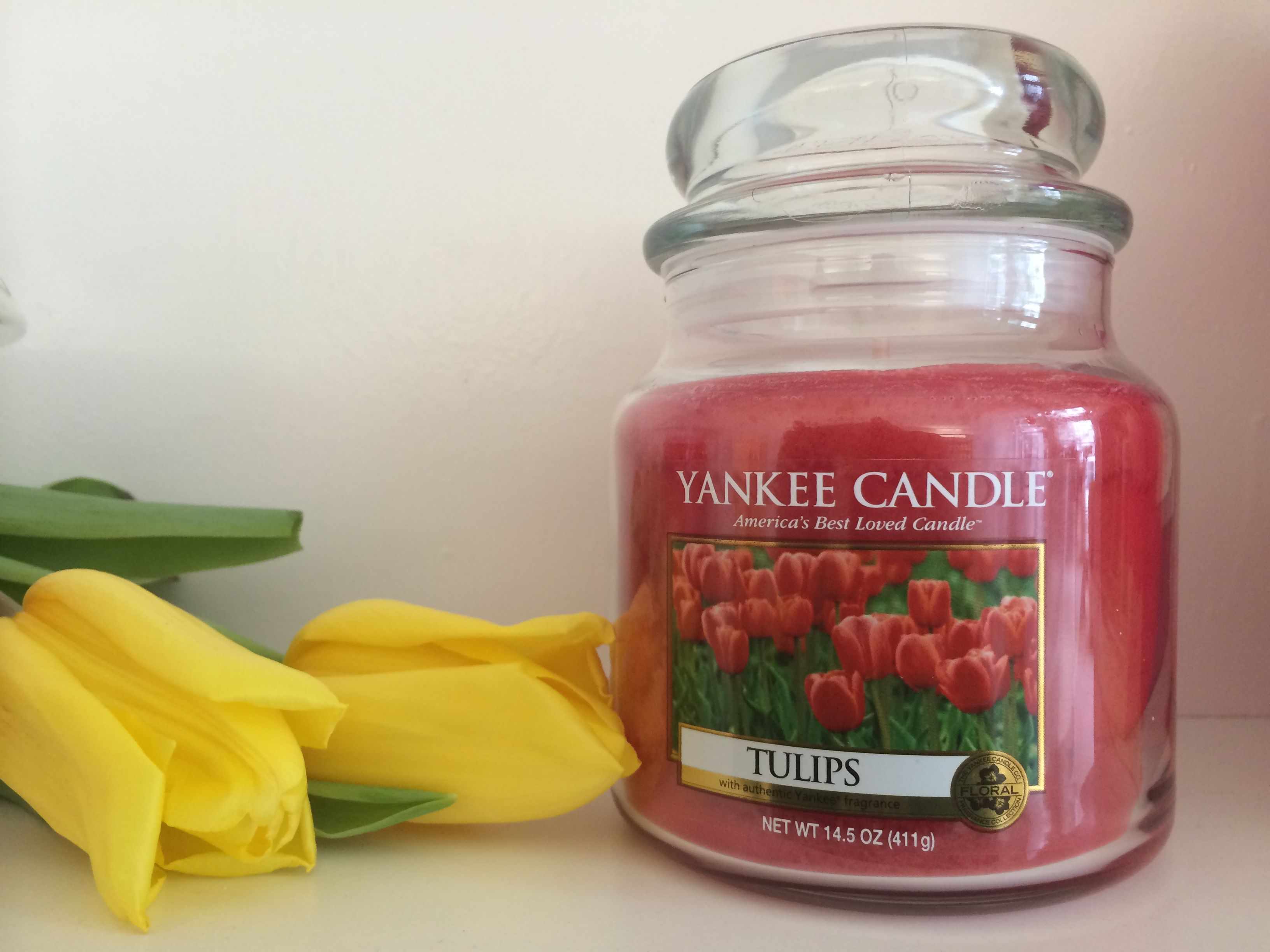 Tulpen Tulip