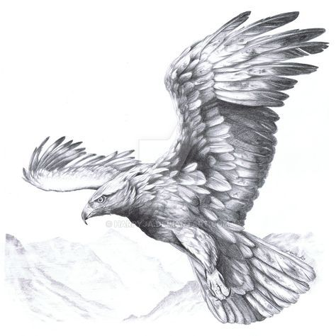 Golden Eagle Aquila chrysaetos II by harpyja.deviantart ...