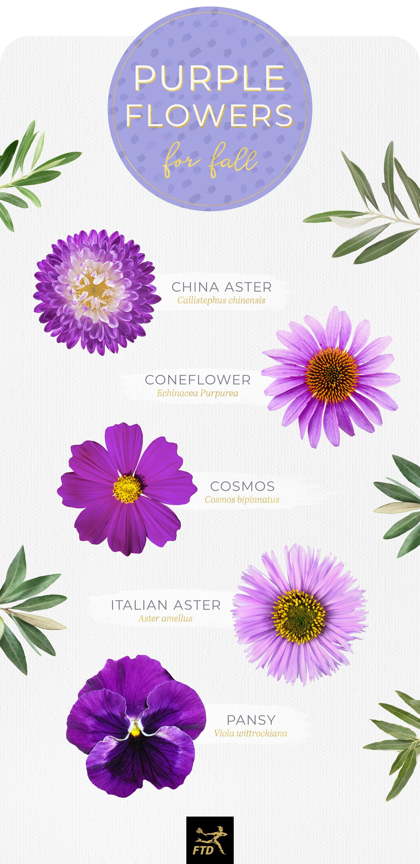 50 Types of Purple Flowers (With images) Types of purple