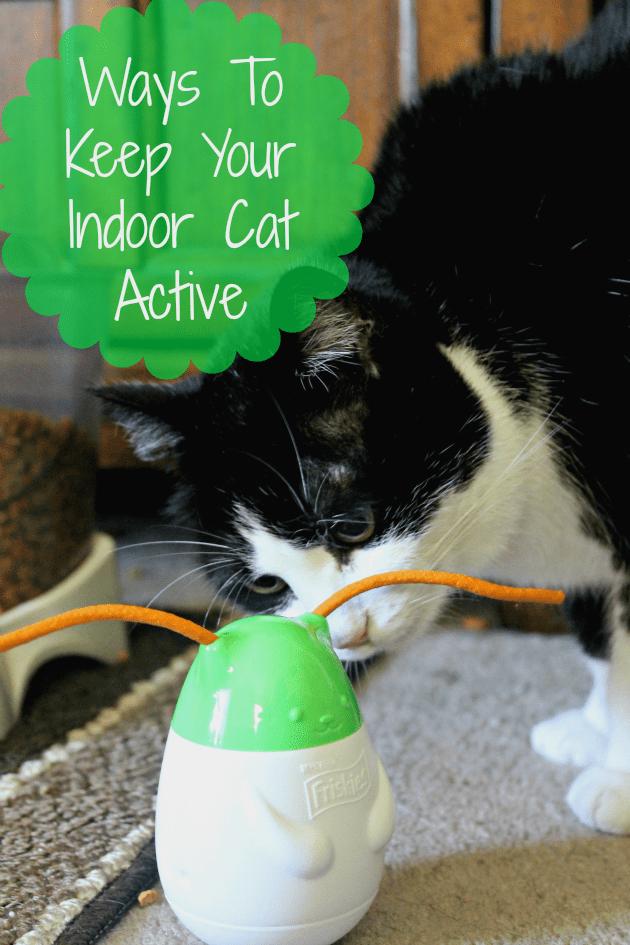4 Ways To Keep Your Indoor Cat Active And Happy