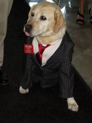 labrador retriever dog costumes - Halloween Costumes For Labradors