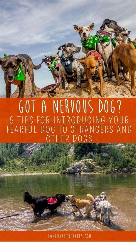 Dog Training Items Cesar Millan Dog Training Videos Dog