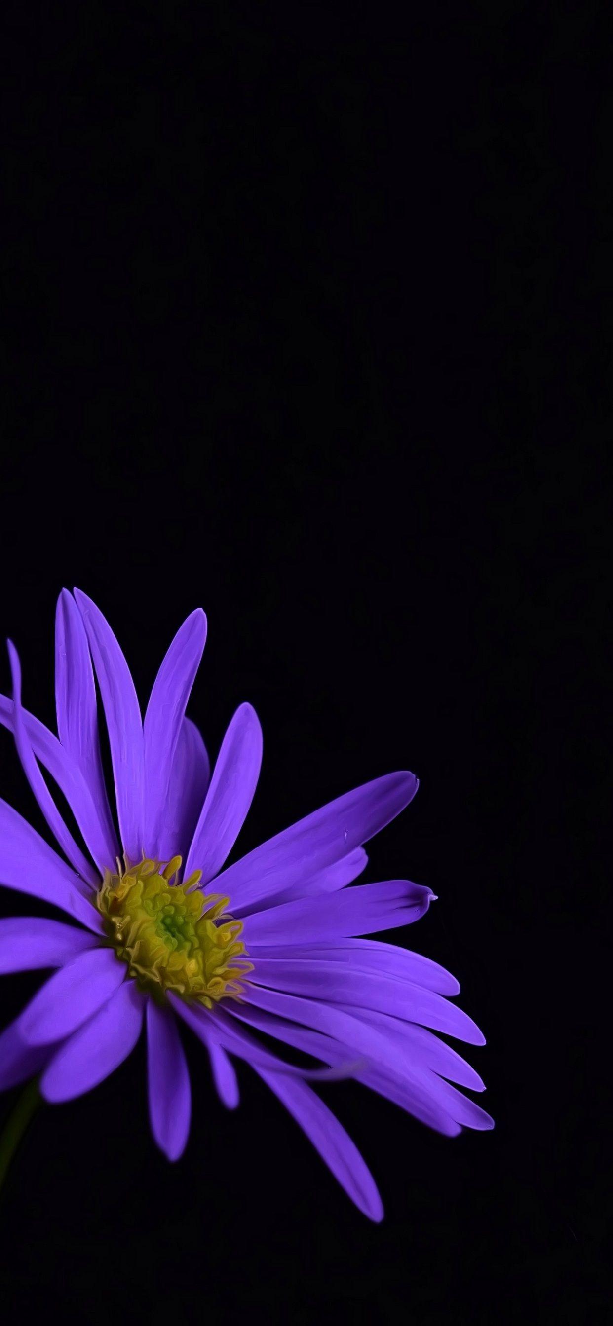 Pin By Satbir Kaur On R In 2020 Purple Flowers Wallpaper Flower Iphone Wallpaper Apple Wallpaper Iphone