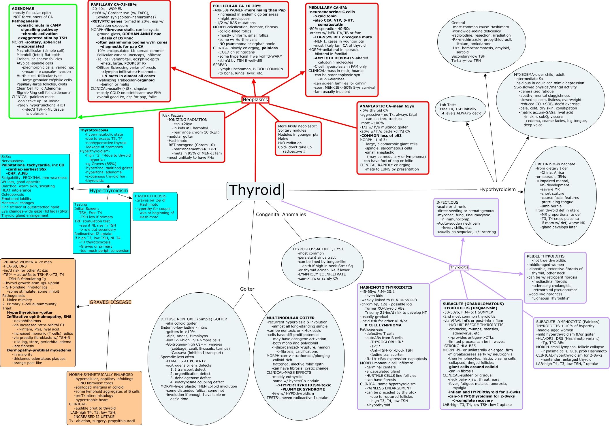 Everything About Thyroid