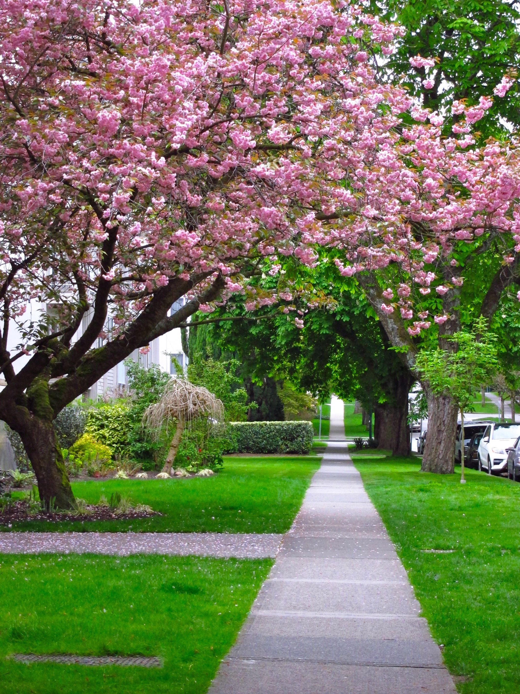 Kerrisdale Village Vancouver S Most Charming Community West Coast Canada Modern Landscaping Spring Scenery