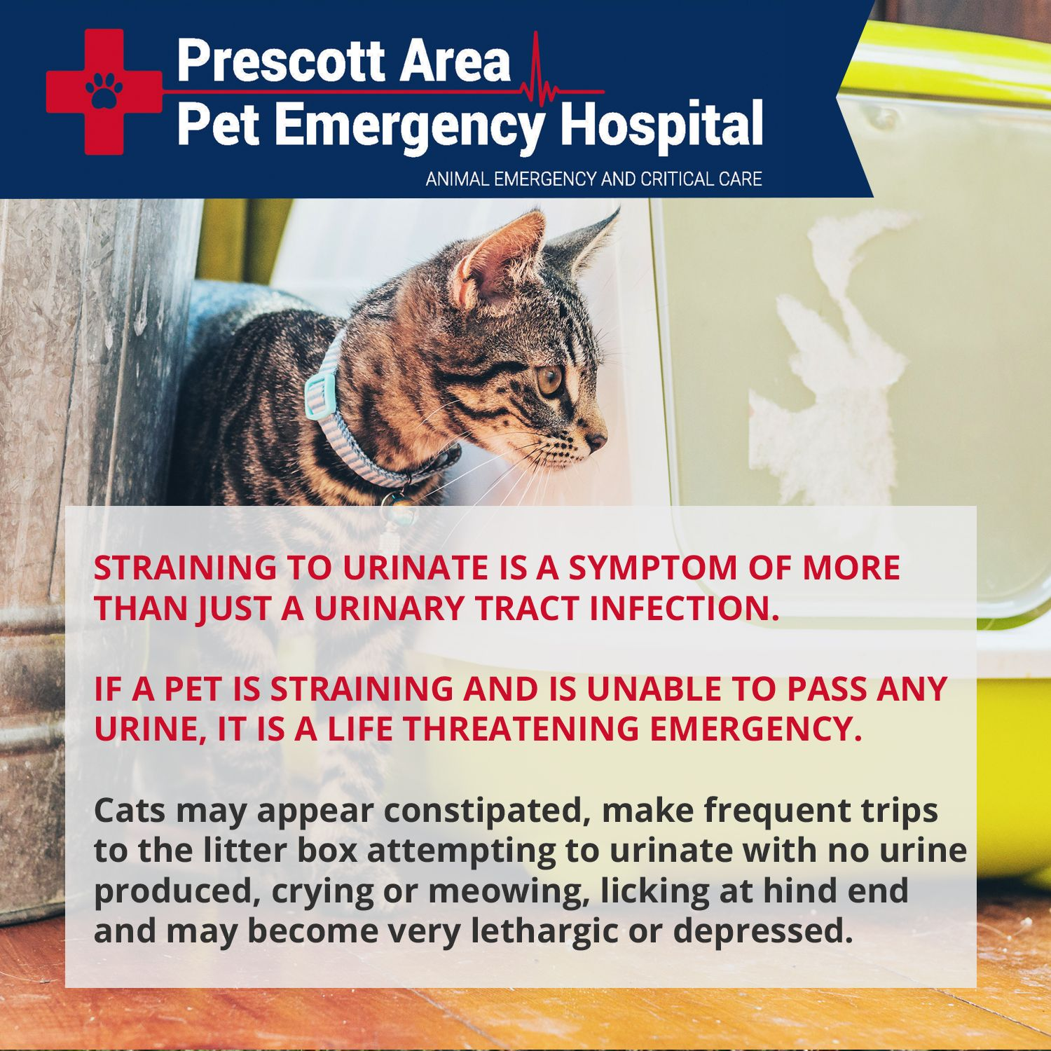 Straining to urinate is a symptom of more than just a UTI