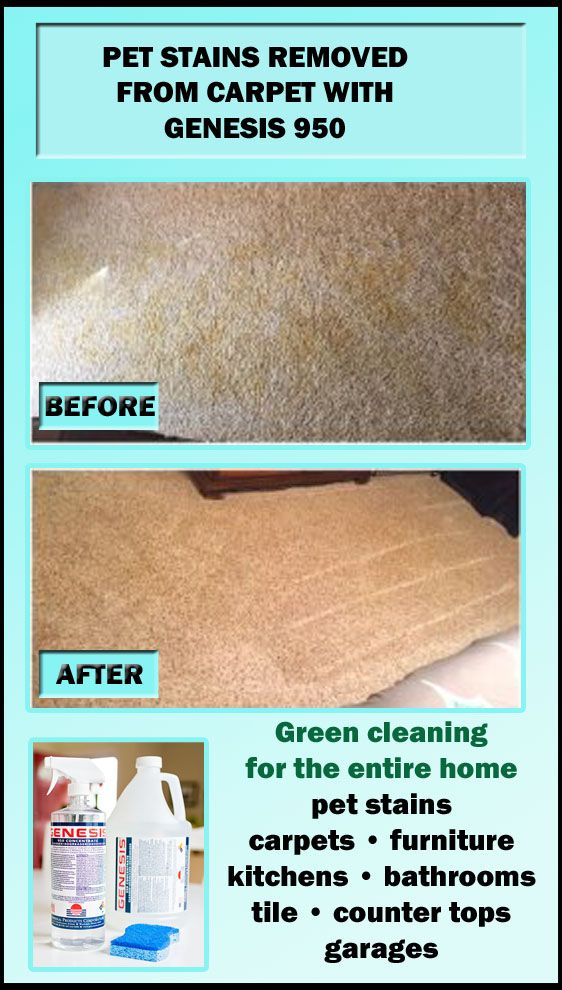 Remove Pet Urine Stains From Carpet Before Amp After Carpet