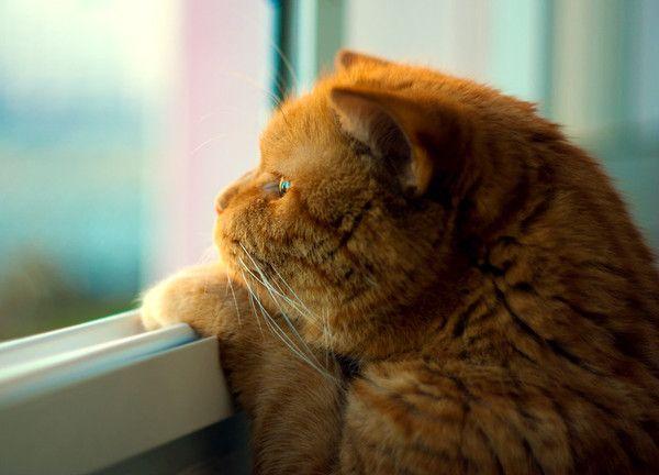 Quanto è grande il mondo di un gatto?