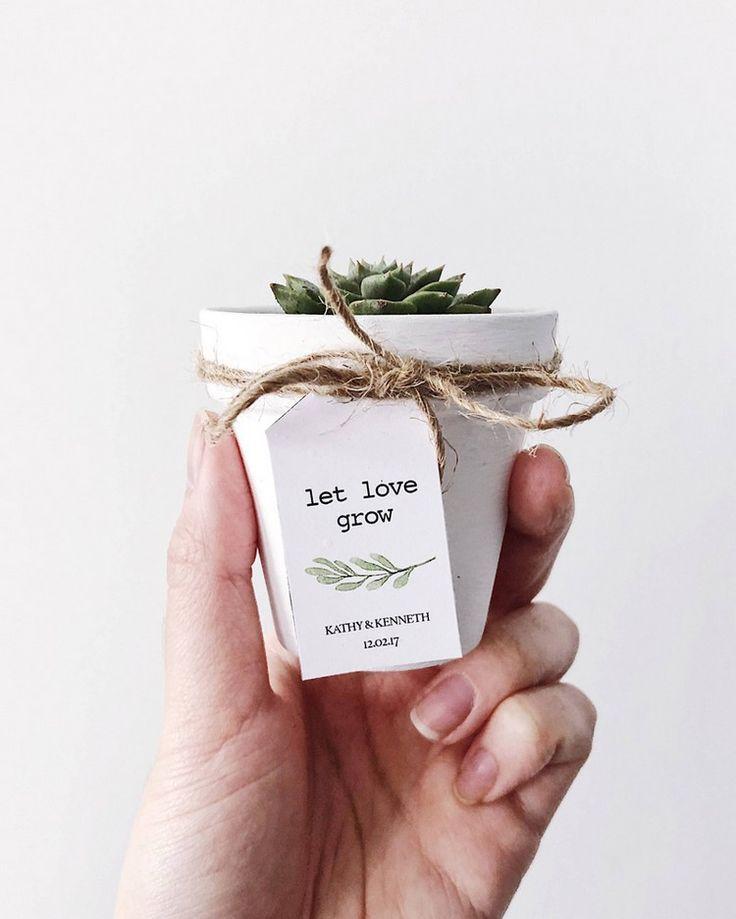 Suculentas para la boda: ideas para favores originales
