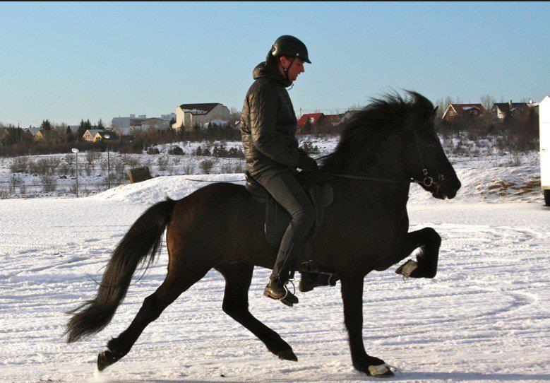 Fantastiskt Fin Islandpferde Pferde