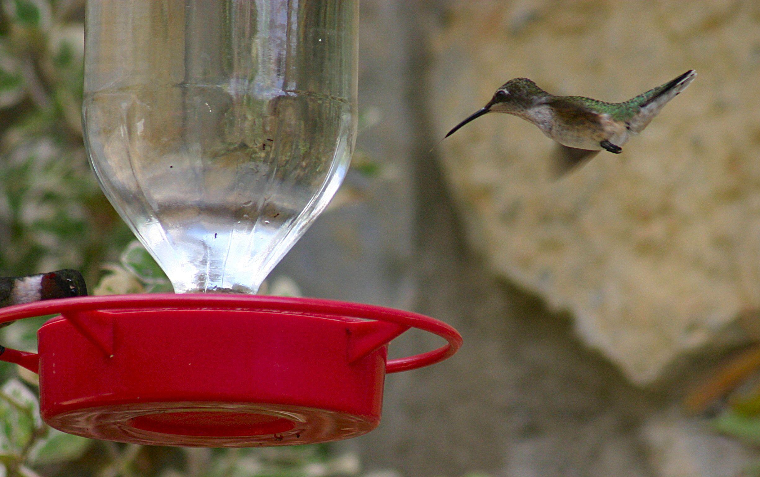 When Do the Hummingbirds Return Humming bird feeders