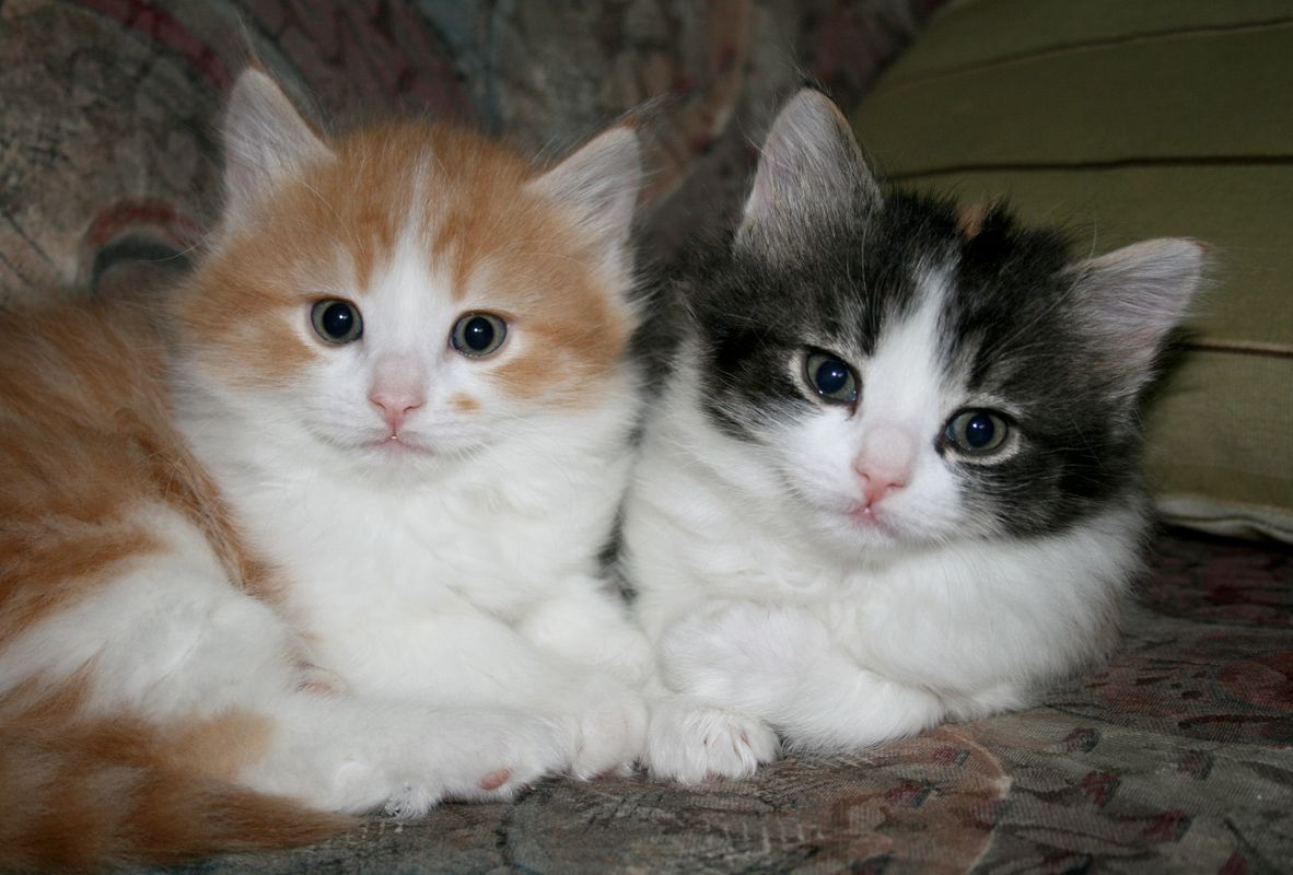 brother & sister Cute cats, Cat photo, Animals